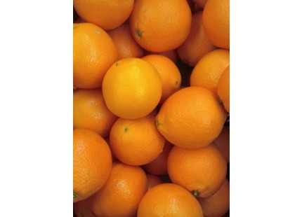 Navelina Orange for juice 19 kg