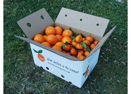 Mixed boxes 19 kg: Navelina Orange for juice + Clemenvilla Mandarin