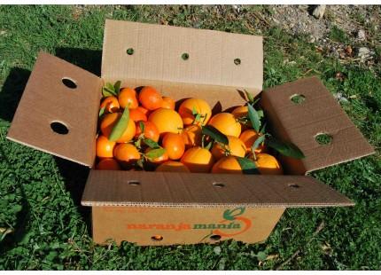 Mixed boxes 20 kg:(13kg) Navelina Orange for juice + (7kg) Loretina Mandarin