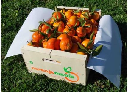 Tangerine Mini Box 9kg