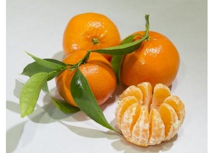Tardia Mandarin 14 kg
