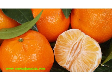 Early Tangerines 9kg