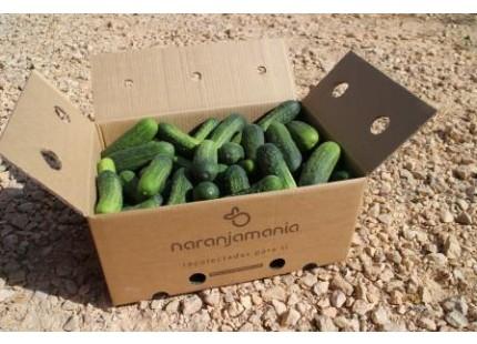 Valencian Cucumber 9Kg