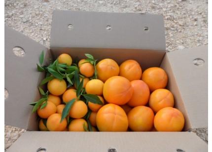 Caja Mixta 14kg Mandarina y Caqui Persimon ✔
