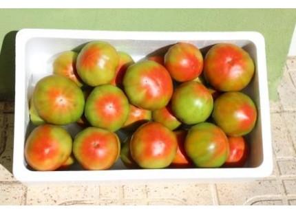 Optimal tomato 14kg. ✔