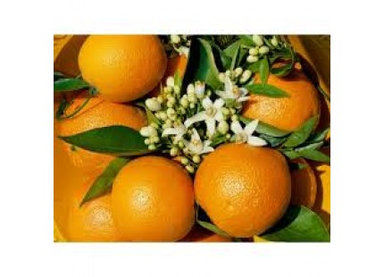 Valencia Lane Orange for juice 20 kg