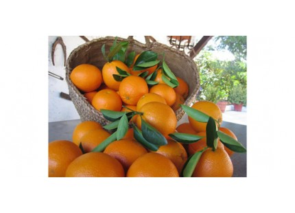 Valencia Lane Orange for juice 9kg