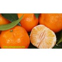 Early Tangerines 9kg
