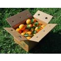 Navel Lane-Late Orange for table 15 kg