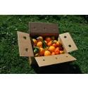 Mixed boxes 15 kg: (10kg) Navel Lane-Late Orange for table + (5kg) Tardia Mandarin