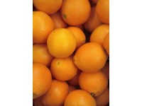 Navelina Orange for juice 19 kg
