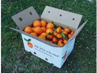 Mixed boxes 20 kg: (13kg) Navelina Orange for juice + (7kg) Clemenules Mandarin