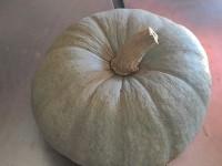Calabaza Valenciana 1kg