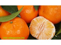 Early Tangerines 14kg