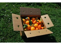 Mixed boxes 14 kg: (9kg) Navel Lane-Late Orange for table + (5kg) Tardia Mandarin