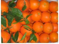 Mixed boxes 14 kg: (10kg)  Navelina Orange for table + (4kg) Loretina Mandarin