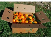 Mixed boxes 14 kg: (10kg) Navelina Orange for table + (4kg) Clemenules Mandarin