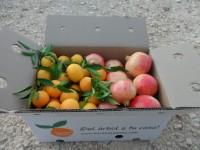 Caja Mixta 9kg  Mandarina y Granada Mollar ✔