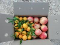 Caja Mixta 14kg  Mandarina y Granada Mollar ✔