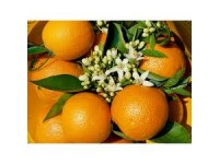 Valencia Lane Orange for juice 15 kg