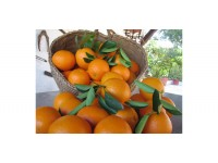 Valencia Lane Orange for table + Valencia Late for juice 10 kg