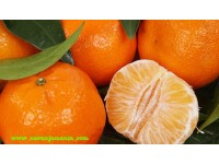 Early Tangerines 5kg