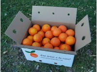 Navel Lane-Late Orange for juice 15 kg