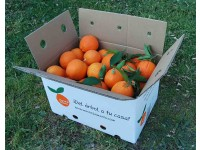 Navelina Orange for table + Navelina for juice 19 kg